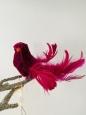 Vtáčik na štipci magenta