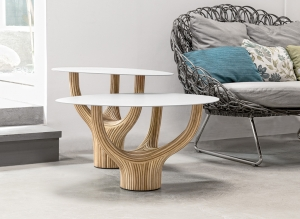 Acacia stolek M