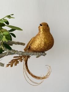 Ptáček na skřipci zlatý